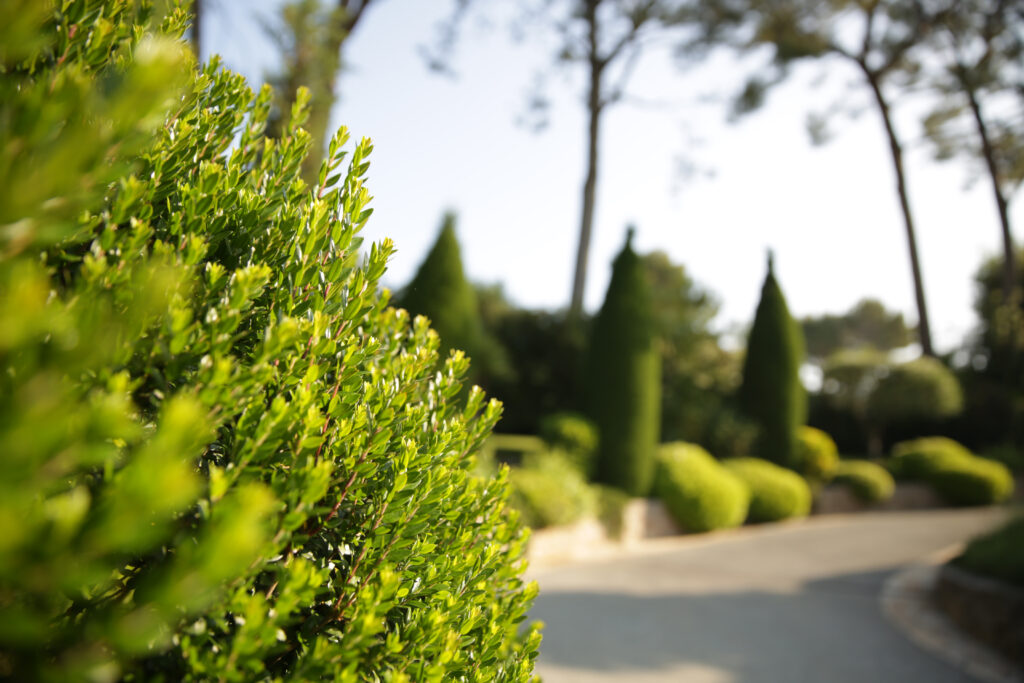 Martin Martin paysages - aménagement du jardin - zoom plante
