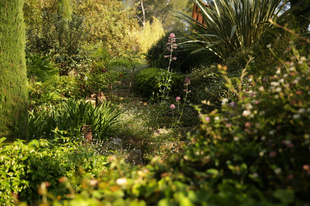 Martin Martin paysages - jardin provençal - vue d'ensemble