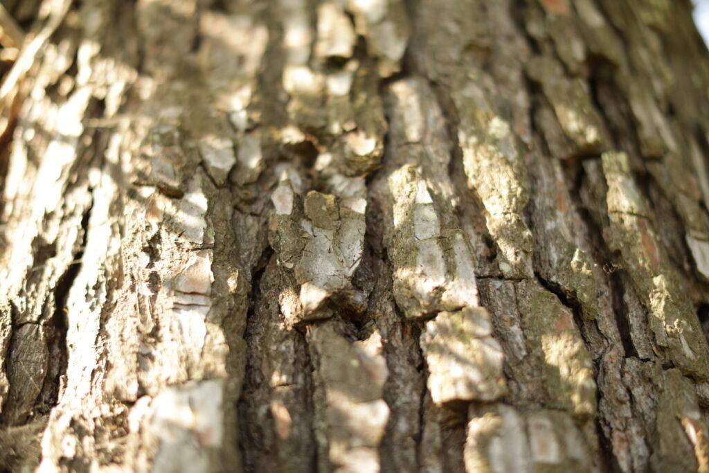 Martin Martin paysages - aménagement du jardin - écorce de l'arbre