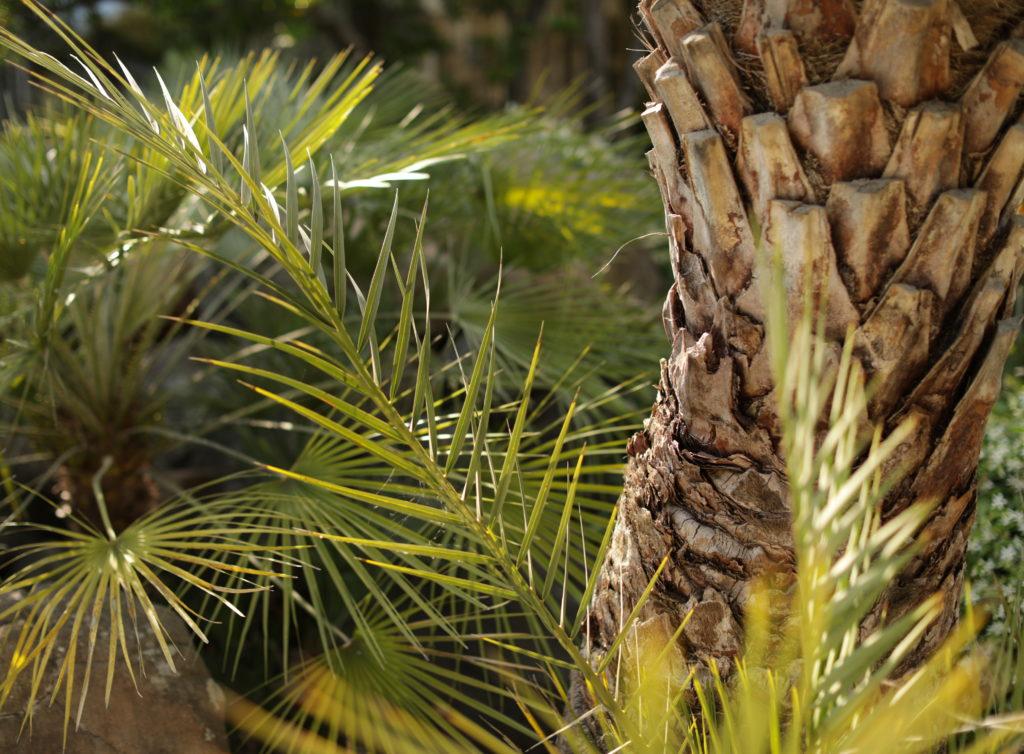 Martin Martin paysages - jardin végétal - palmier