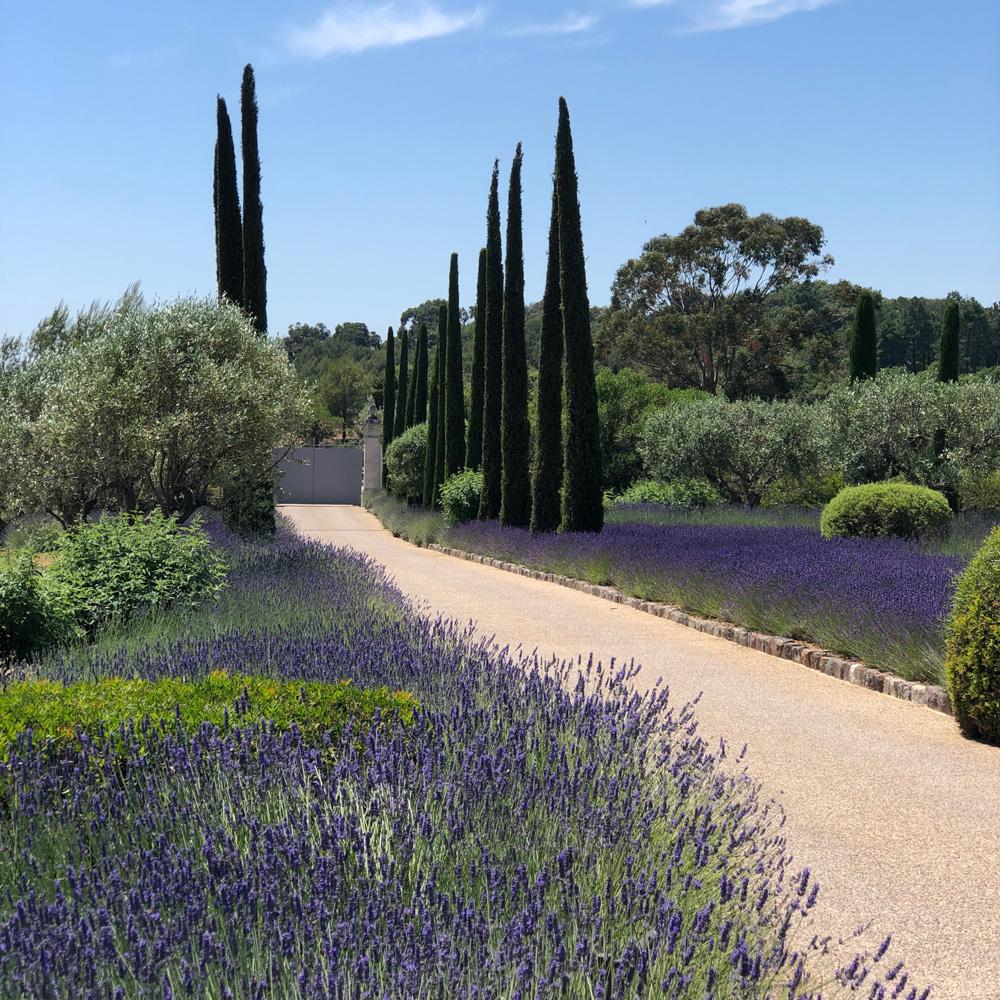 Martin Martin paysages - conception jardin - jardin avec lavande