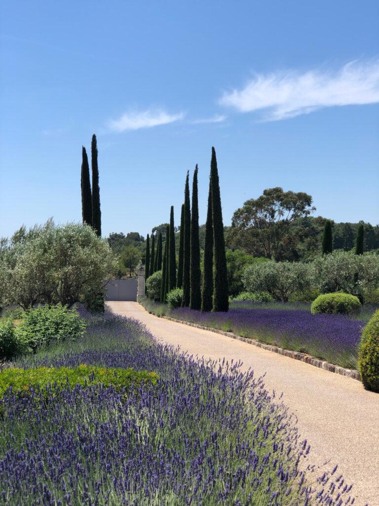 Martin Martin paysages - jardin provençal - lavande