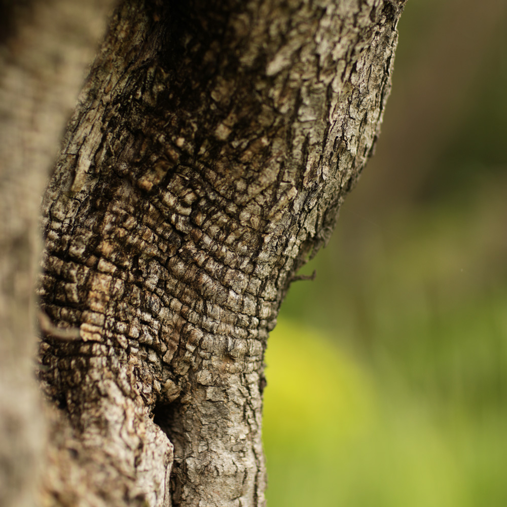 Martin Martin paysages - entretien du jardin - arbre