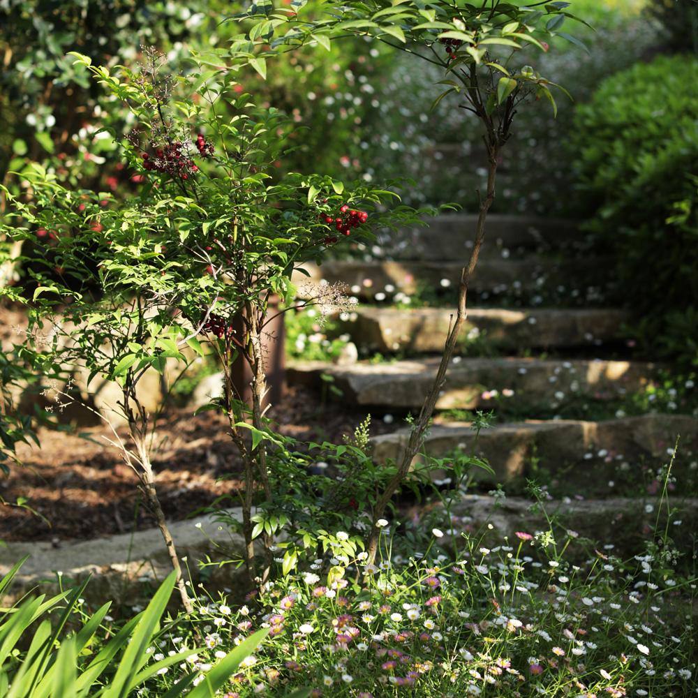 Martin Martin paysages - aménagement du jardin - plantes