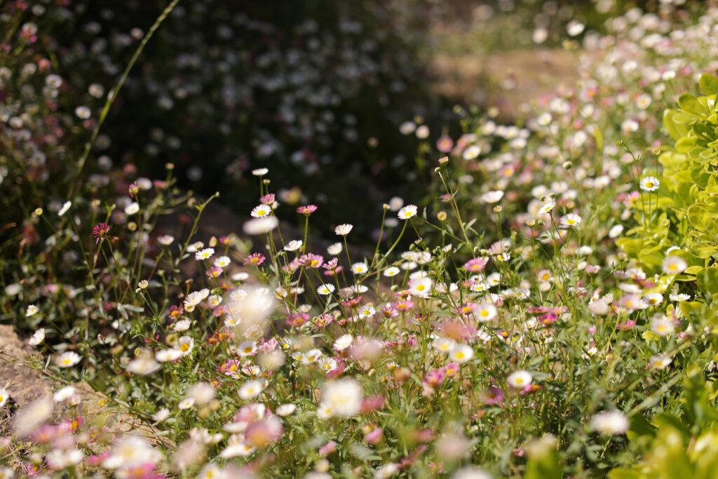 Martin Martin paysages - jardin provençal - plantes