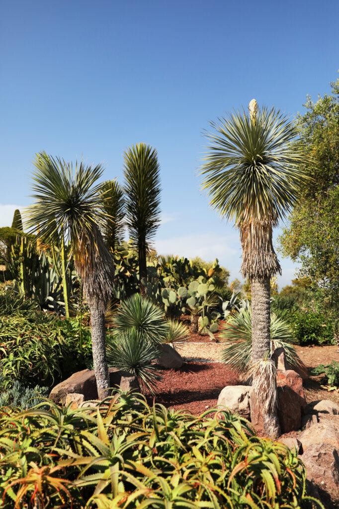 Martin Martin paysages - jardin végétal avec cactus