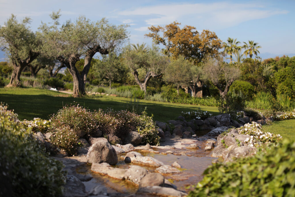 Martin Martin paysages - jardin provençal - oliviers