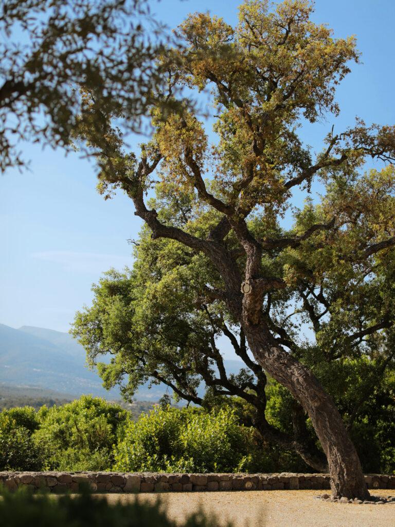 Martin Martin paysages - jardin provençal - vue olivier