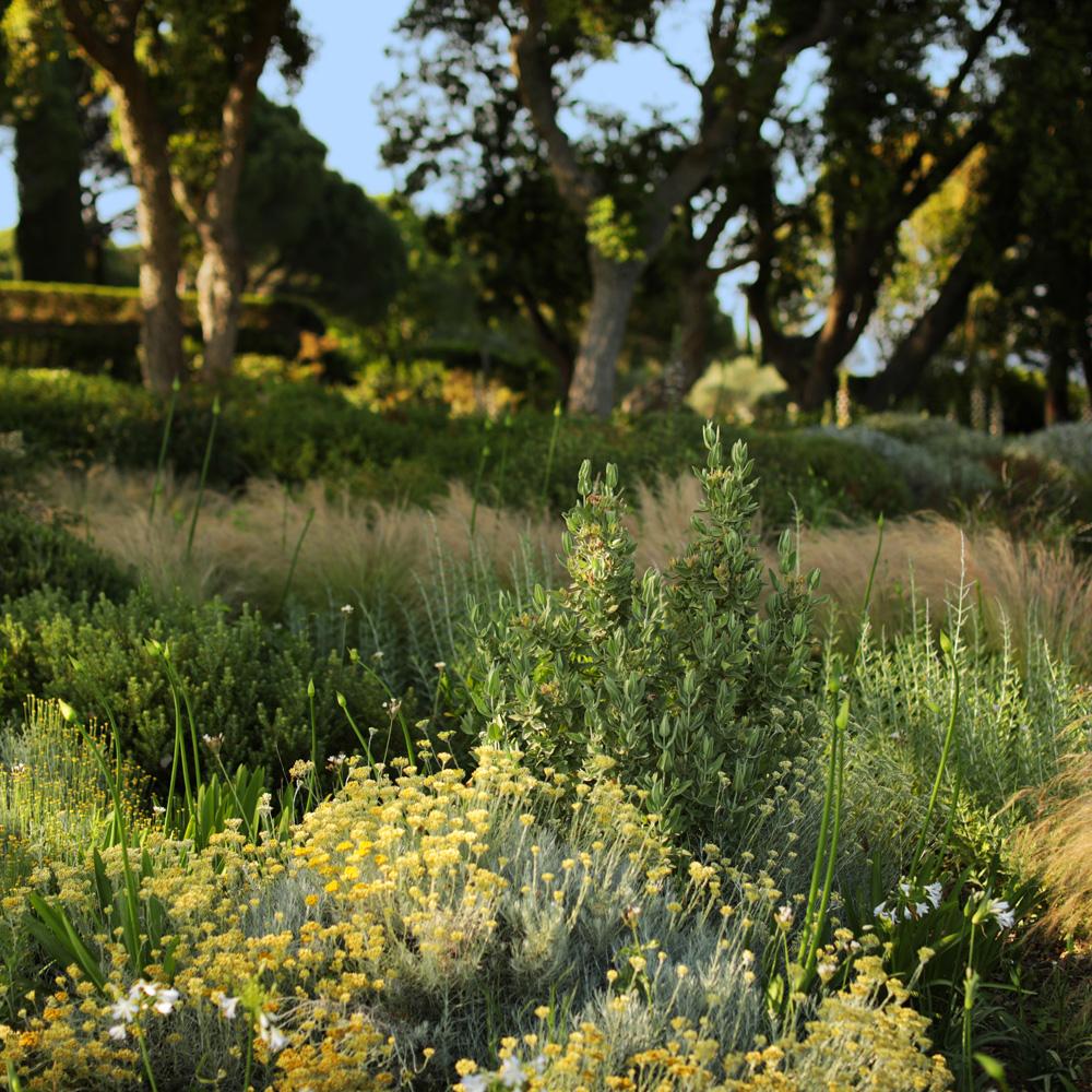 Martin Martin paysages - entretien du jardin - plantes