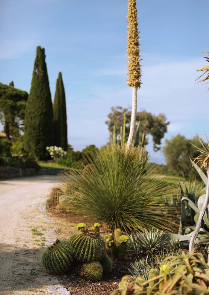 Martin Martin paysages - jardin végétal - cactus