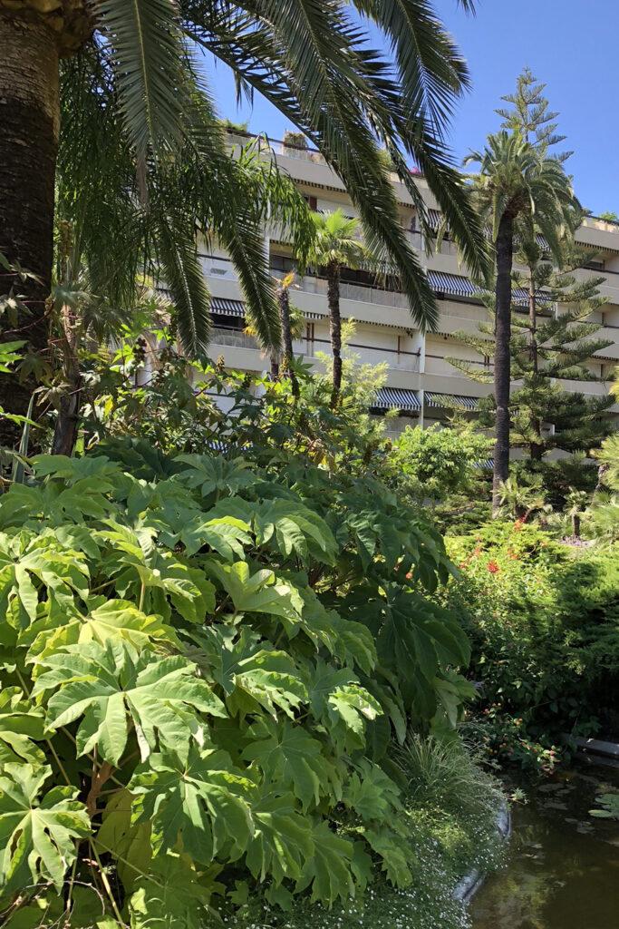Martin Martin paysages - jardin de la Riviera - copropriété