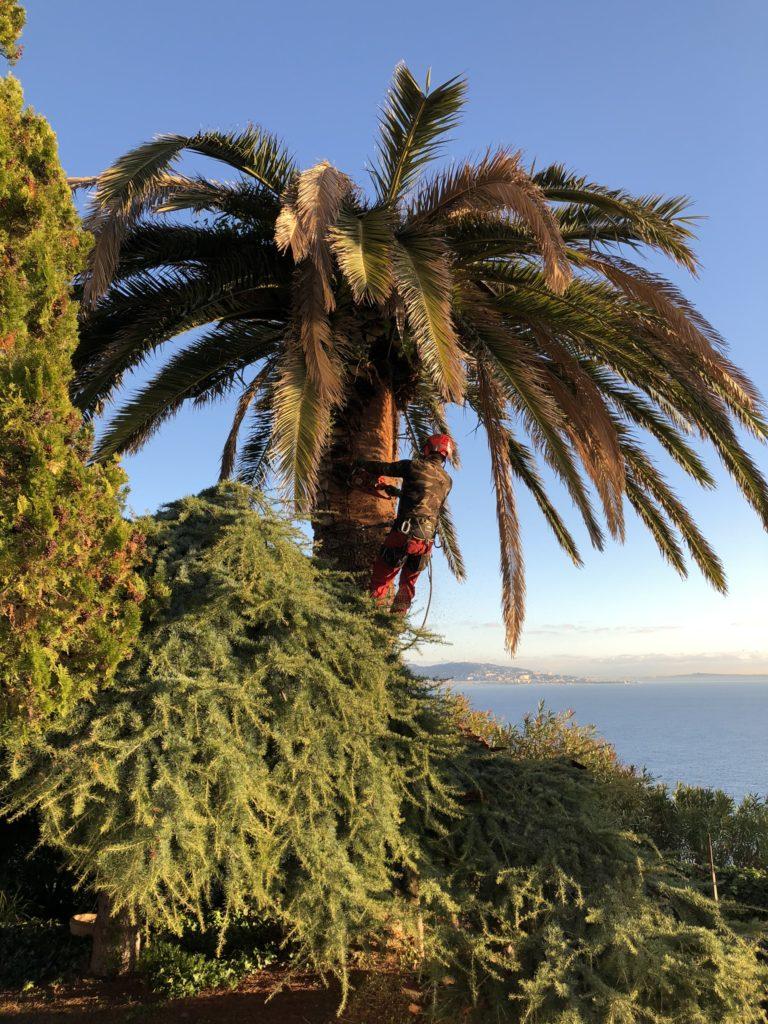 Martin Martin paysages - abattage palmier